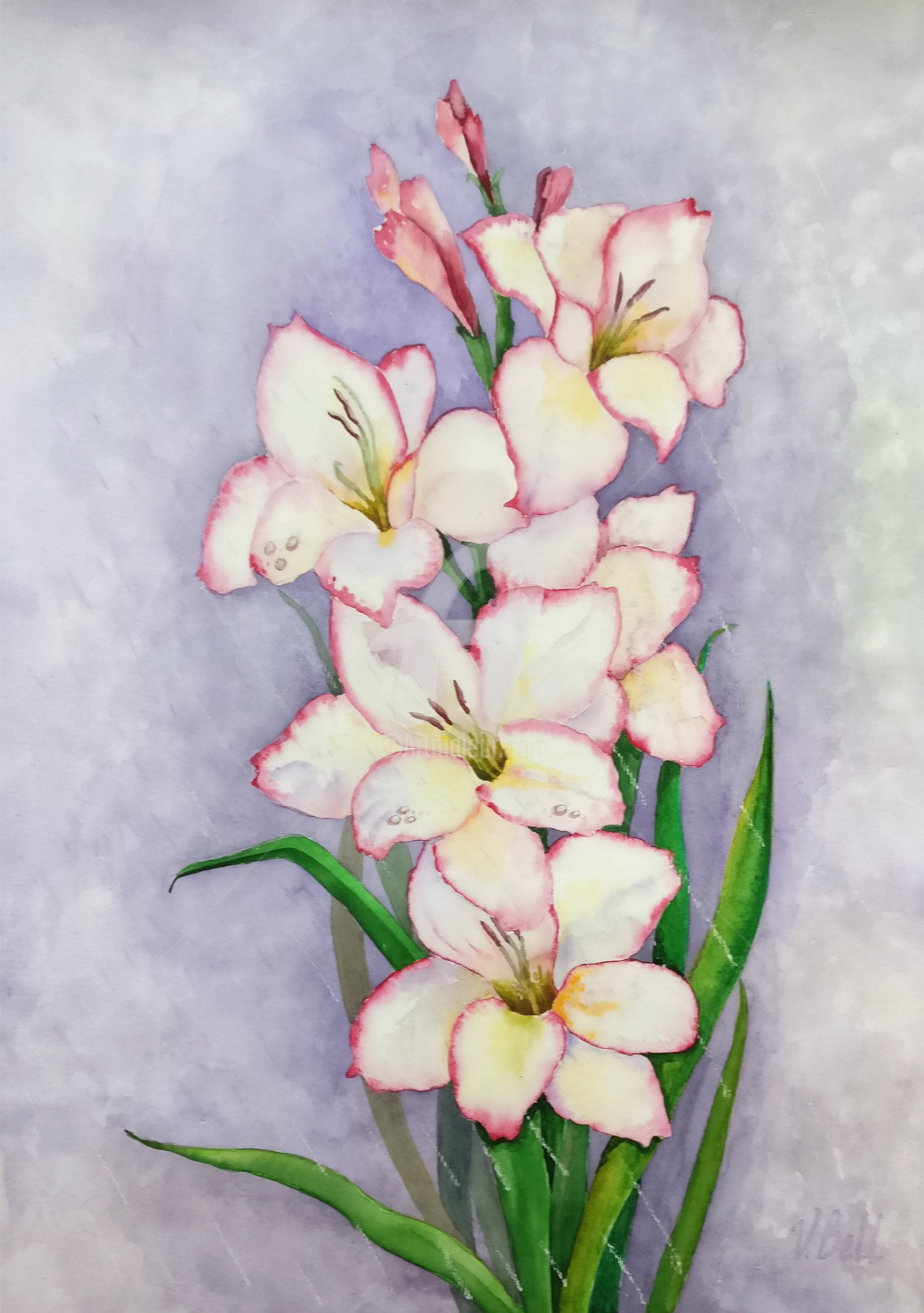 Gladiolus in the Rain,garden flower,pink and white Painting by ...