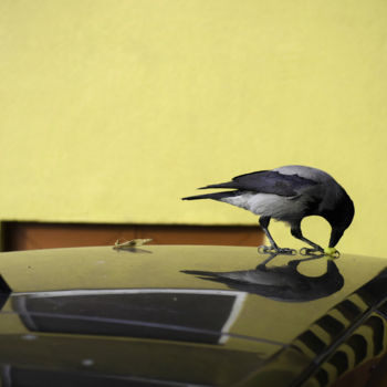 """Photography titled """"Bird On Roof"""" by Alen Gurovic, Original Art, Non Manipulated Photography"""