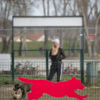 """Photography titled """"Red dog"""" by Alen Gurovic, Original Art, Non Manipulated Photography"""
