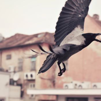 Bird Photography, non manipulated photography, figurative, artwork by Alen Gurovic
