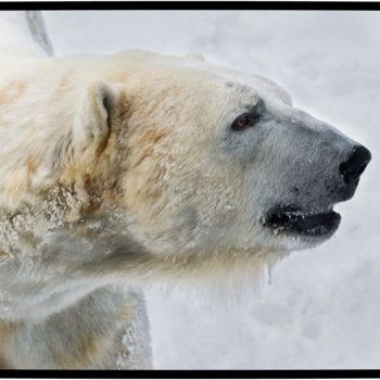 """Photography titled """"King of the North"""" by Gareth P Jones, Original Art, Digital Photography"""