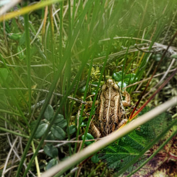 """Photography titled """"Wood Frog"""" by Igzotic, Original Art, Digital Photography"""