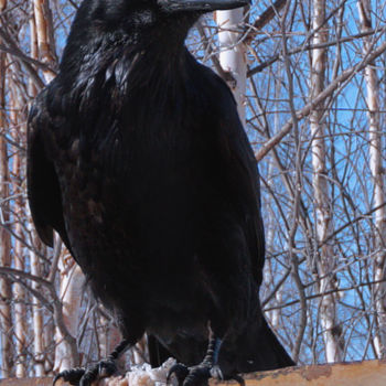 """Photography titled """"Raven Brunch"""" by Igzotic, Original Art, Digital Photography"""