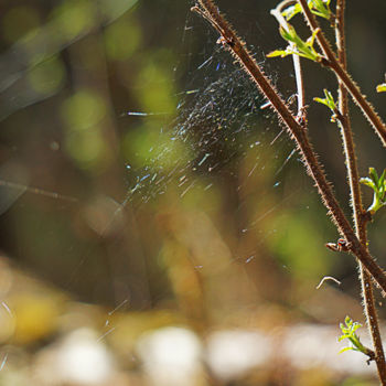 """Photography titled """"Web"""" by Igzotic, Original Art, Digital Photography"""