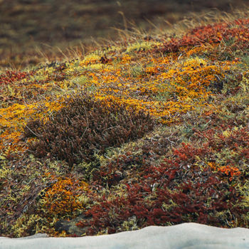 """Photography titled """"Tundra"""" by Igzotic, Original Art, Digital Photography"""