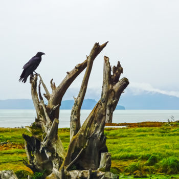 """Photography titled """"Raven Perch"""" by Igzotic, Original Art,"""