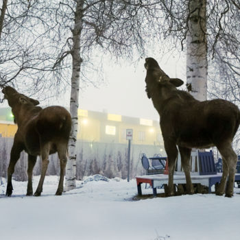 """Photography titled """"Moose and Calf"""" by Igzotic, Original Art, Digital Photography"""