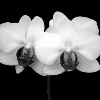 """Photography titled """"Orchids"""" by Pfister, Original Art,"""