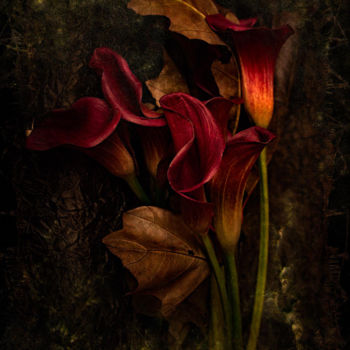 Flower Photography, digital photography, conceptual art, artwork by Philippe Bousseau