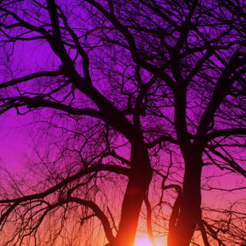 """Photography titled """"Redreaming Sunset F…"""" by Redreamer, Original Art,"""