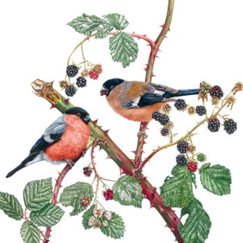 """Painting titled """"Bullfinches and Bla…"""" by Zoe Norman, Original Art, Watercolor"""