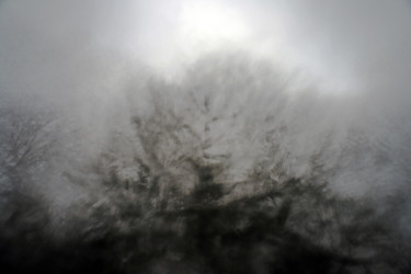 """Photography titled """"Tree Angles"""" by Alan Hillyer, Original Art, Digital Photography"""