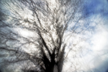 """Photography titled """"Leaning Tree Appeas…"""" by Alan Hillyer, Original Art, Digital Photography"""