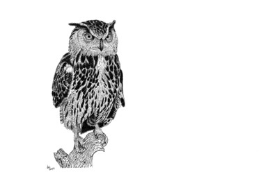 """Drawing titled """"Eared Owl"""" by Anni Angus, Original Art, Ink"""