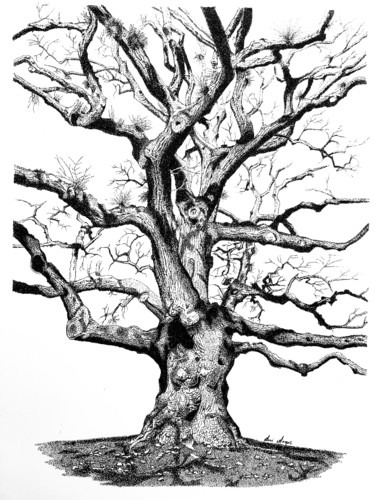 """Drawing titled """"Tangled"""" by Anni Angus, Original Art, Ink"""