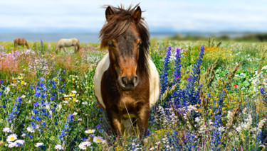 """Photography titled """"Pony in a blooming…"""" by Arija Paikule, Original Art, Manipulated Photography"""