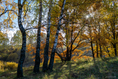 """Photography titled """"Autumn Forest, Land…"""" by Arkady Gude, Original Art,"""