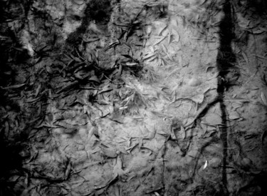 16.5x23.6 in © by philippe berthier