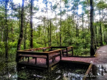 """Photography titled """"Manchac Swamp Board…"""" by Bella Bourgeois, Original Art, Non Manipulated Photography"""