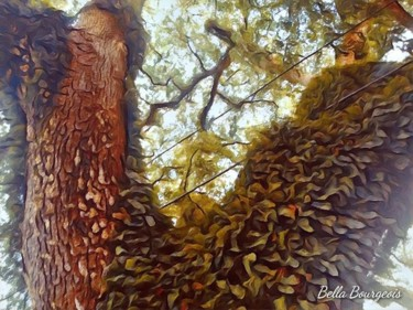 """Photography titled """"Magical Oaks 3"""" by Bella Bourgeois, Original Art, Digital Photography"""