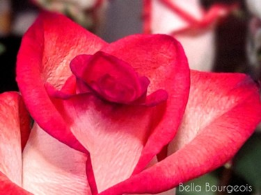 """Photography titled """"Flora"""" by Bella Bourgeois, Original Art, Non Manipulated Photography"""