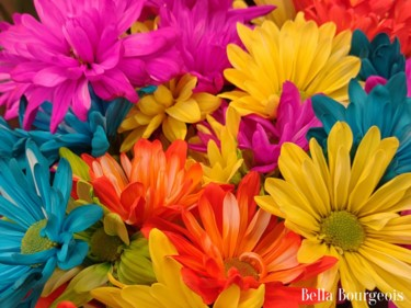 """Photography titled """"Rainbow Daisy"""" by Bella Bourgeois, Original Art, Non Manipulated Photography"""