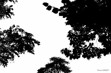 """Photography titled """"Silhouettes"""" by Bruno Robert, Original Art, Digital Photography"""