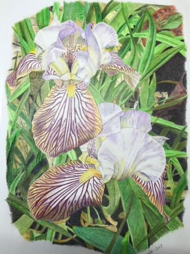 """Drawing titled """"Irises #artistsuppo…"""" by Carole Mcalpine, Original Art, Pencil Mounted on Other rigid panel"""