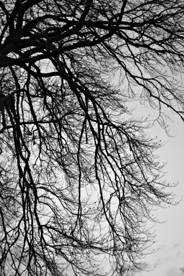 Tree Photography, digital photography, figurative, artwork by Céline Folloppe