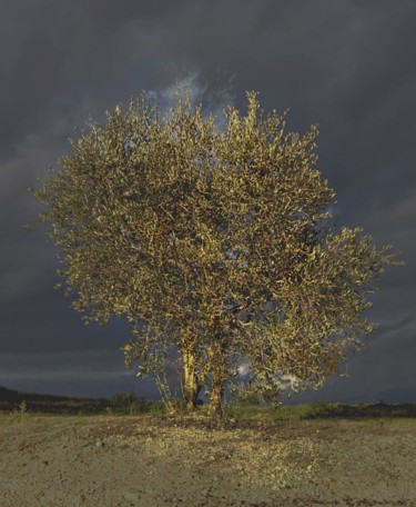"""Photography titled """"OLIVE TREE"""" by A Damiaan, Original Art, Non Manipulated Photography"""