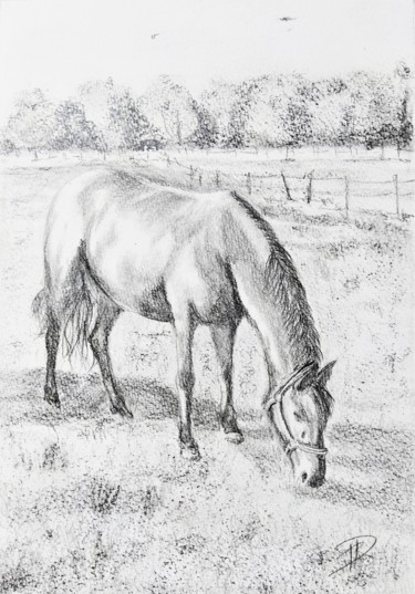 Horse Drawing, pencil, illustration, artwork by Dominique Mireille Richard