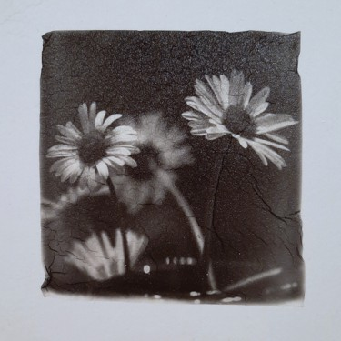 Flower Photography, manipulated photography, figurative, artwork by Ava Bob
