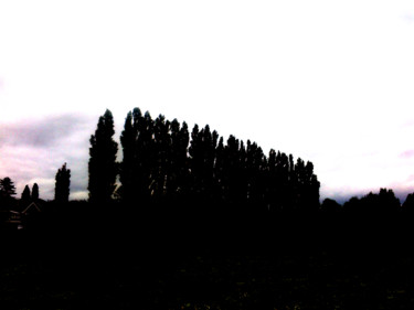 """Photography titled """"Row Of Poplars"""" by Gerald Shepherd, Original Art, Manipulated Photography"""