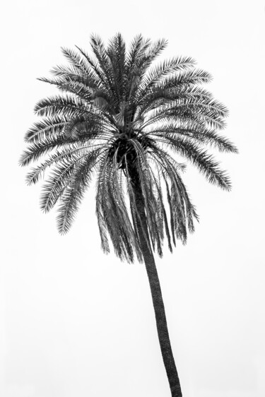 """Photography titled """"Palm Tree"""" by Glauco Meneghelli, Original Art, Digital Photography"""