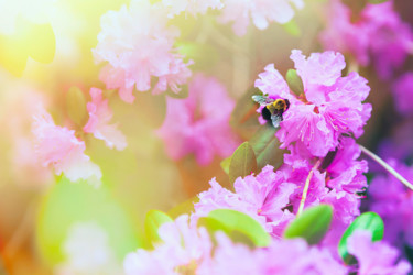 """Photography titled """"BeeImages,Spring Im…"""" by Golden Wraith, Original Art, Manipulated Photography"""