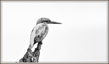 """Photography titled """"Before the Action!"""" by Goutam Chakraborty, Original Art, Digital Photography"""