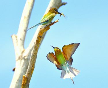 """Photography titled """"I want a share of T…"""" by Goutam Chakraborty, Original Art, Digital Photography"""