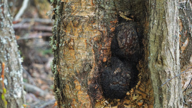 """Photography titled """"Chaga"""" by Igzotic, Original Art, Digital Photography"""