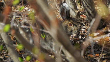 """Photography titled """"Hidden Hare"""" by Igzotic, Original Art, Digital Photography"""