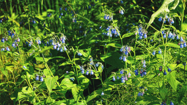 """Photography titled """"Bluebells Bluebells"""" by Igzotic, Original Art,"""