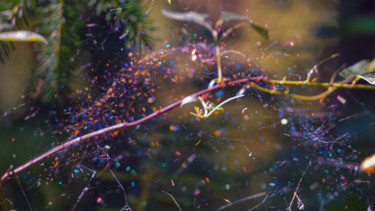 """Photography titled """"Web In The Wind"""" by Igzotic, Original Art, Digital Photography"""
