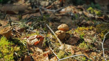 """Photography titled """"Small Fungus"""" by Igzotic, Original Art, Digital Photography"""