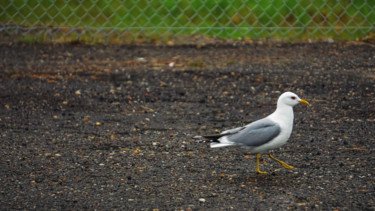 """Photography titled """"Seagull Walking"""" by Igzotic, Original Art, Digital Photography"""