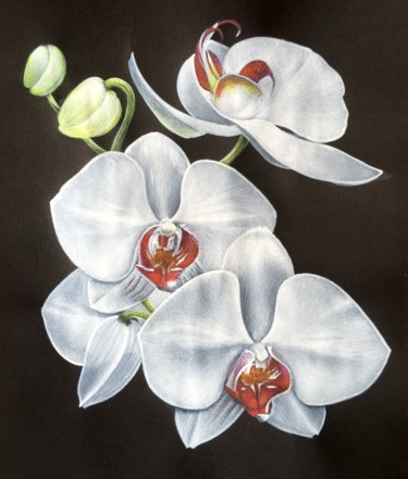 """Painting titled """"Orchidées"""" by Isabelle Molinard, Original Art, Acrylic"""