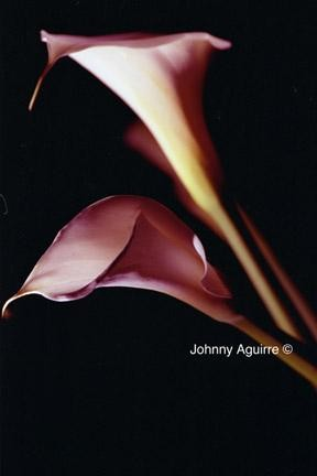 20x16 in ©2005 by Johnny Aguirre