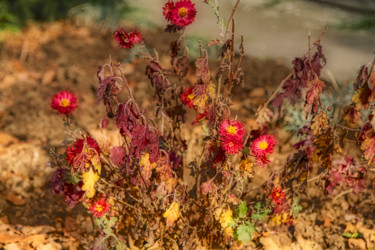 """Photography titled """"Old Wildflowers"""" by Marian Bogatu, Original Art, Manipulated Photography"""