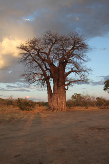 """Photography titled """"Baobab"""" by Martine France Moreau, Original Art, Non Manipulated Photography"""