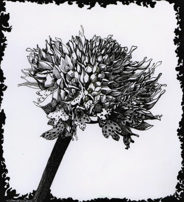 """Drawing titled """"WILD ORCHID"""" by Nives Palmić, Original Art, Ink"""