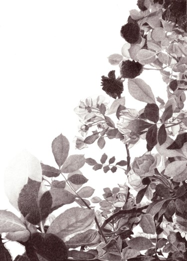 """Drawing titled """"ROSES IN TWILIGHT"""" by Nives Palmić, Original Art, Graphite"""