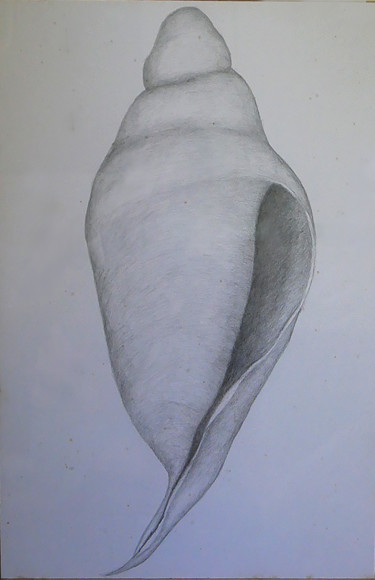 """Drawing titled """"wedding conch"""" by Norachai, Original Art, Pencil"""